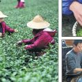 Tea master steeps young apprentice in ancient tradition