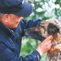 Retired police dogs still being of service