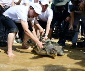 Group formed to protect endangered turtles